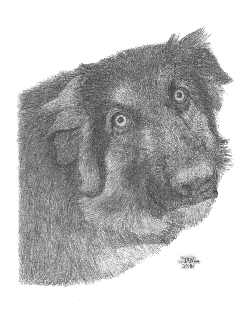 Pencil drawings & sketches of dogs & puppies