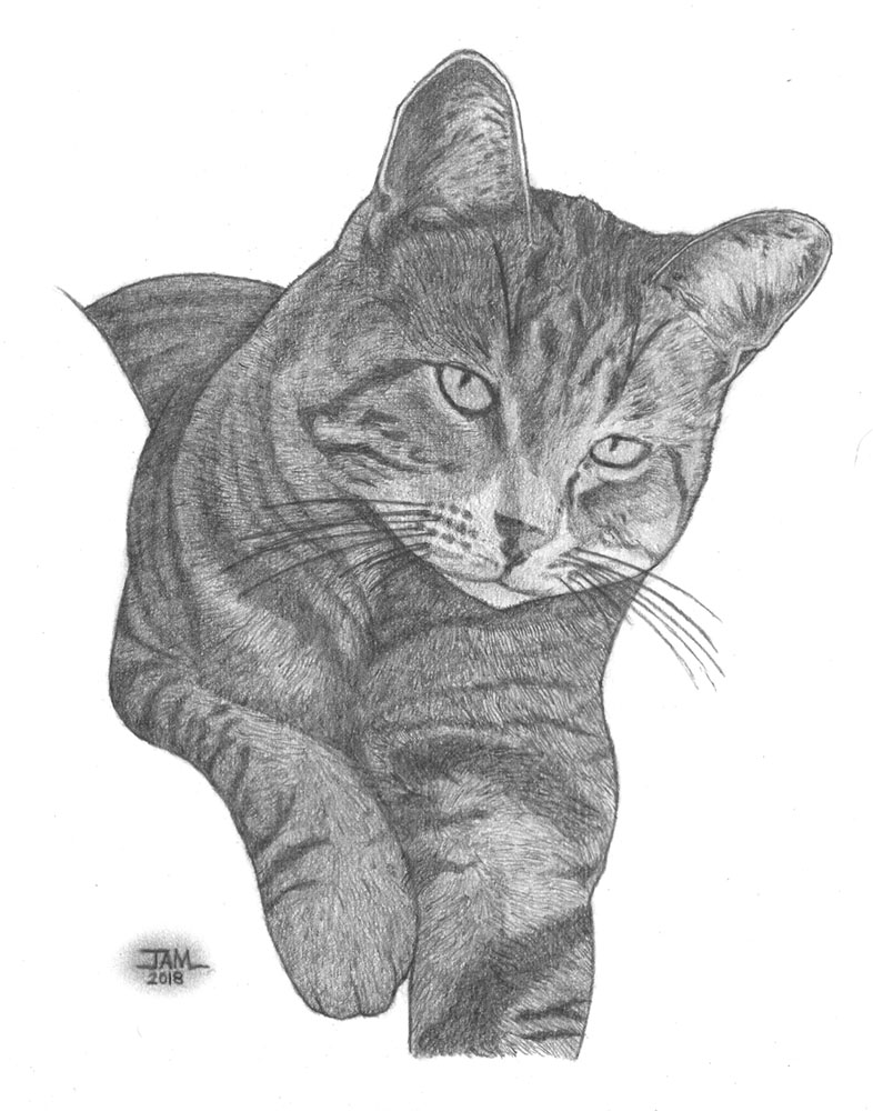 Pencil drawings & sketches of cats & kittens